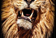 львы для камина