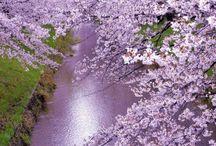 Japan | Japão | 日本 / Tourism