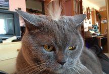 Meow / ♥️Cat, kitty