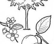 Tree coloring pages / This page has tree coloring pages for kids,teachers and parents. Kids will learn tree types by coloring them.