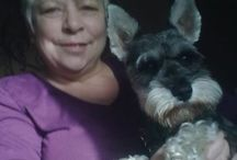and then we got a Schnauzer ........ / Love of Schnauzers