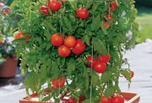 Frutas e legumes  em vasos