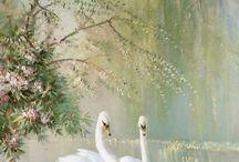 A ~ Swan Lake