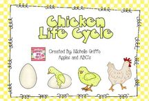 Chicks / by Meredith Haithcock