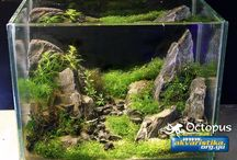 aquasscape - planted tanks