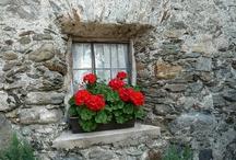 Cheerful windows / by Hantie Combrink