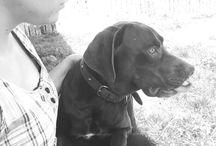My Dog / Tobias Raimundo Aguilera Astudillo