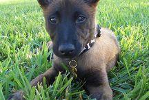 puppy love / by Alecia Beeman