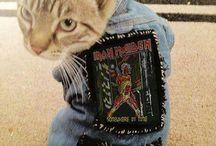 Meow miao