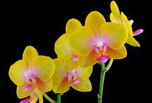 Flowers / by Heidi Florence