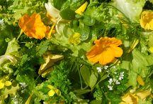 Nasturtiums - growing & using organic edible flowers at Maddocks Farm Organics. / Nasturtiums growing at Maddocks Farm Organics & ideas for using edible nasturtiums. www.maddocksfarmorganics.co.uk Available May to October