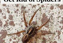 Pest at bay