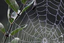 Webs - Ιστός
