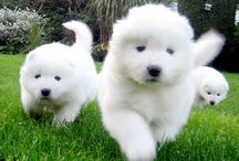 Cute Baby Animals, Dammit!