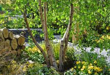 Woodland Gardens / Some woodland gardens, most are ours, occasionally other pics