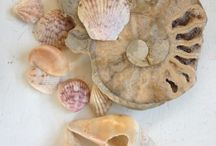 Natural Collections for Inspiration / by Dawn Chorus Studio