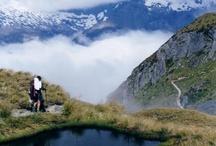 Wild in New Zealand