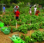 Teaching Agriculture / On this board you will find official Ag in the Classroom resources, hands-on activities to incorporate into curriculum, and tips for teaching students where their food comes from.  / by American Farm Bureau Federation