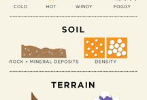 Terroir of Wine