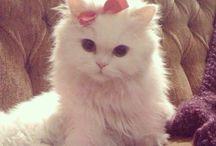 Kattepuser