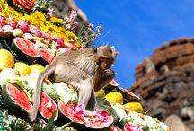 Maymun Açık Büfe Festivali (Monkey Buffet Festival) / Her yıl Kasım ayının son Pazar günü Tayland'ın Lopburi kasabasında yaşayan 3000 maymun için devasa bir açık büfe kuruluyor. Maymun Açık Büfe Festivali (Monkey Buffet Festival) olarak adlandırılan bu festival dünyanın en ilginç festivallerinden biri olup katılımcılara müthiş manzaralar sunuyor.