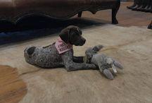 Jolene's First Birthday Fiesta + Sale / Jolene the Shop Dog's first birthday brings celebrations & sales on western wear!