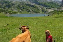 Asturias, España (Spain) / Imágenes del Principado de Asturias, España. Spain, Espagne, Spanien, Espanha, إسبانيا , 西班牙 , スペイン / by Turismo en España - Tourism in Spain