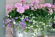 Kwiaty-dom i ogród