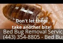 Bed Bug Removal Services in Riva (443) 354-8805 - Bed Bug Treatment