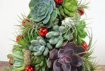 For the love of succulents