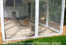 Chook pen