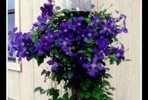 kytky na chalupě