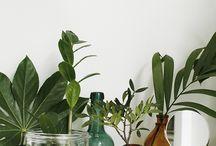 Plantas y demás