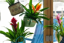 ✾Bromelia, energetic style / Energetic       When you're really busy, you are at your happiest. You enjoy a challenge, are good at multi-tasking and don't get stressed by extra dinner guests, or a tight deadline. Your house is warm and comfortable and you love to have your nearest and dearest around you. A dynamic Bromeliad is a great mate for you: always lively and enthusiastic. Bromeliads are available in energetic colours and shapes which communicate their enjoyment of life.
