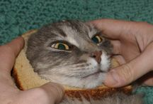 Inbread Cat / by Kat Gray