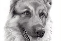 pencil drawings dogs