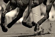 Horses/Polo / by Almendra Garcia