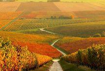 Hungarian nature