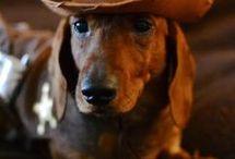 doggie's