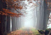Herfst in Nederland / mooie foto's van Nederland in de herfst