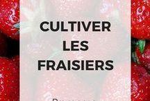 Culture fruits