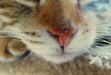 Nala the Cat ❤