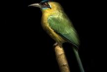 M Birds