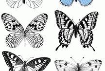vlinders/ butterfly
