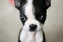 doggies / by Brooke Boren
