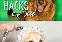 Life Hacks for Living with Pets / We love our furry friends but now and again they can take a toll on our homes!