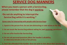 Service and Therapy Dog Info / General information about service and therapy dogs, including laws, research, and manners / by Viking Pups