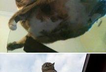 Flooffy meow meow