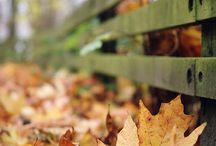 Fall ☕