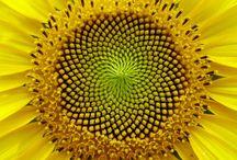 Mønster og geometri